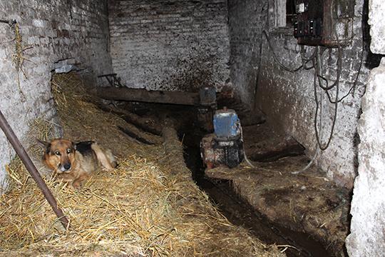 На Пціцкай ферме