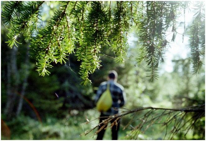 Каб не блукаць ў лесе